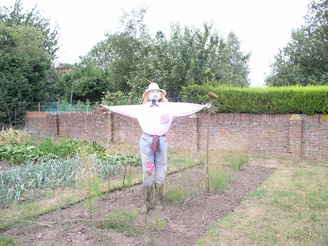 Scarecrow in jeans, shirt and boots in an allotment.