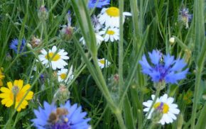 yellow, white and blue flowers in the grass.