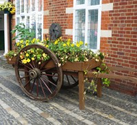 Hop cart planted with yellow flowers.